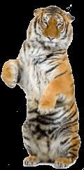 Les tigres du bungalow (electrocul) St-Broc - Les tigres du bungalow c'est un peu Elmer Food Beat qui aurait eu un enfant secret avec KaS Product, un mélange détonnant entre riff électro new wave et chanson paillarde.